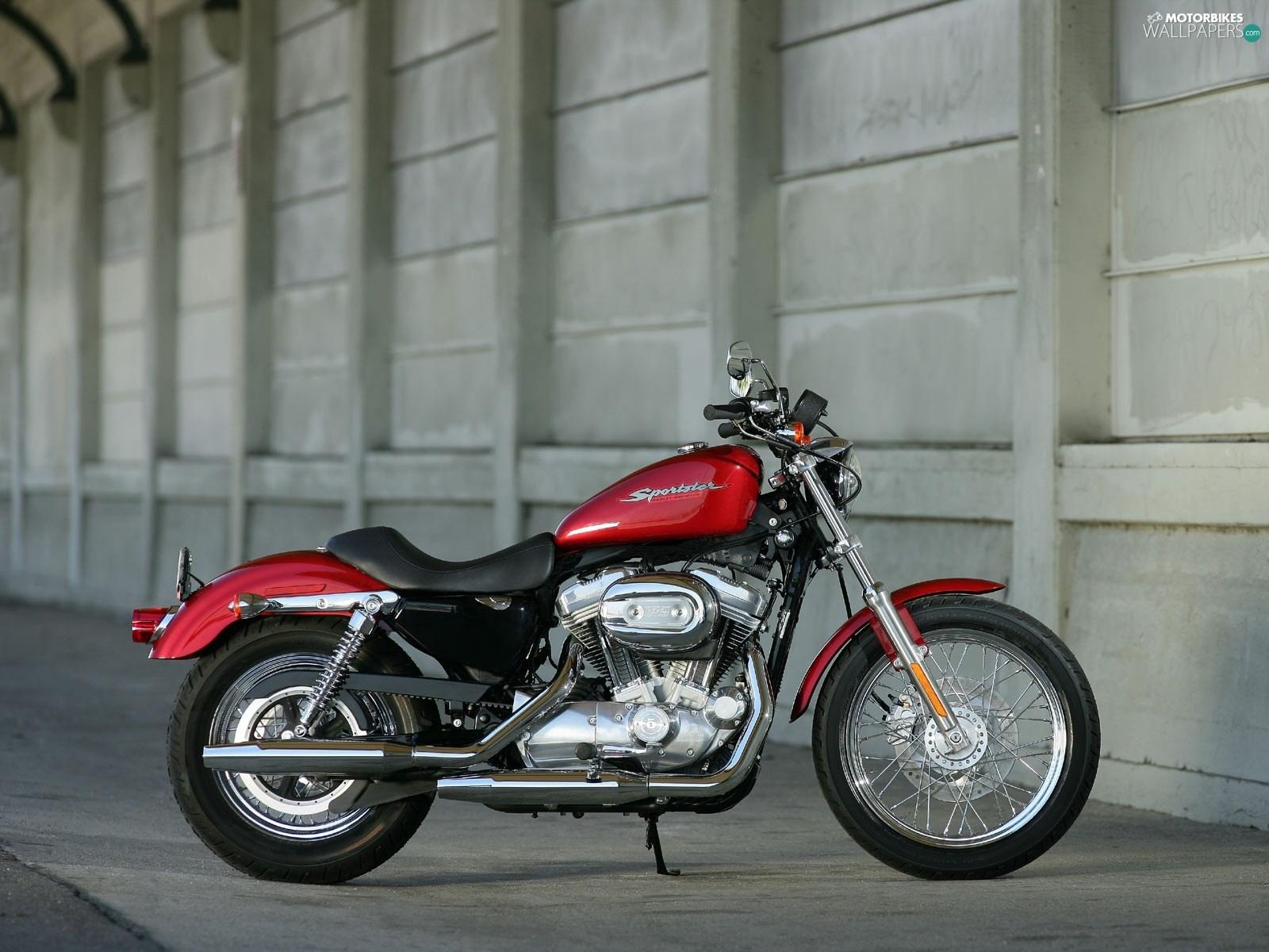 engine harley davidson xl883 sportster caps motorbikes. Black Bedroom Furniture Sets. Home Design Ideas